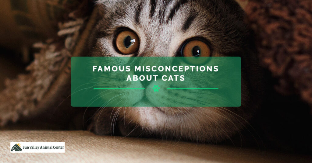 BB-Famous-Misconceptions-About-Cats-5a6f8b37c6526