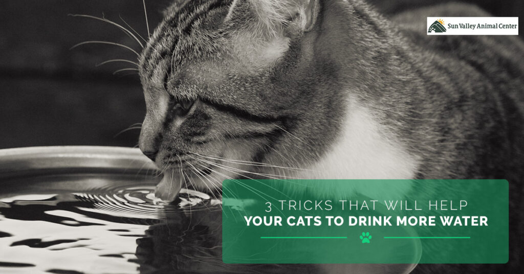 3-Tricks-That-Will-Help-Your-Cats-to-Drink-More-Water-5a996ea424e3f