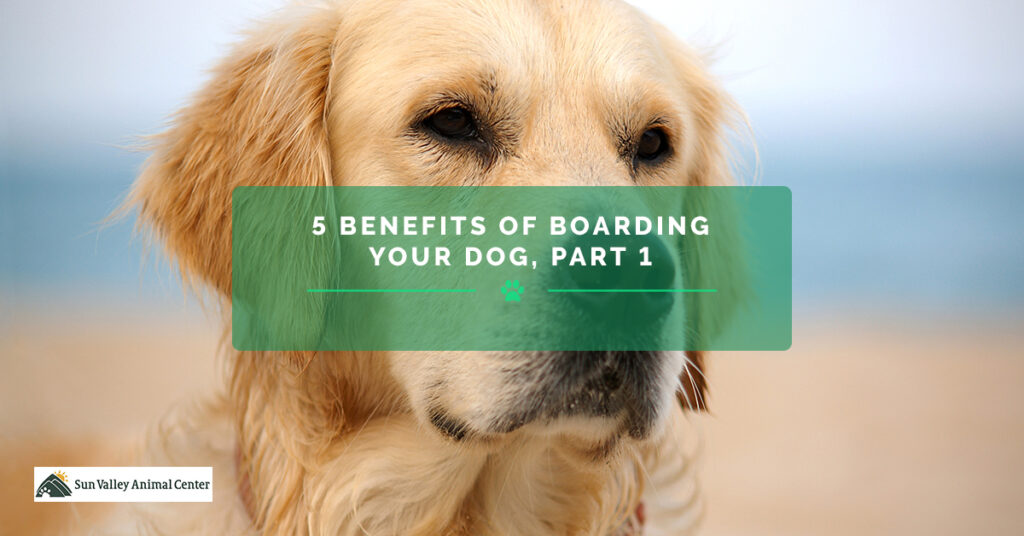 5-Benefits-of-Boarding-Your-Dog-Part-1-5afca291f1807