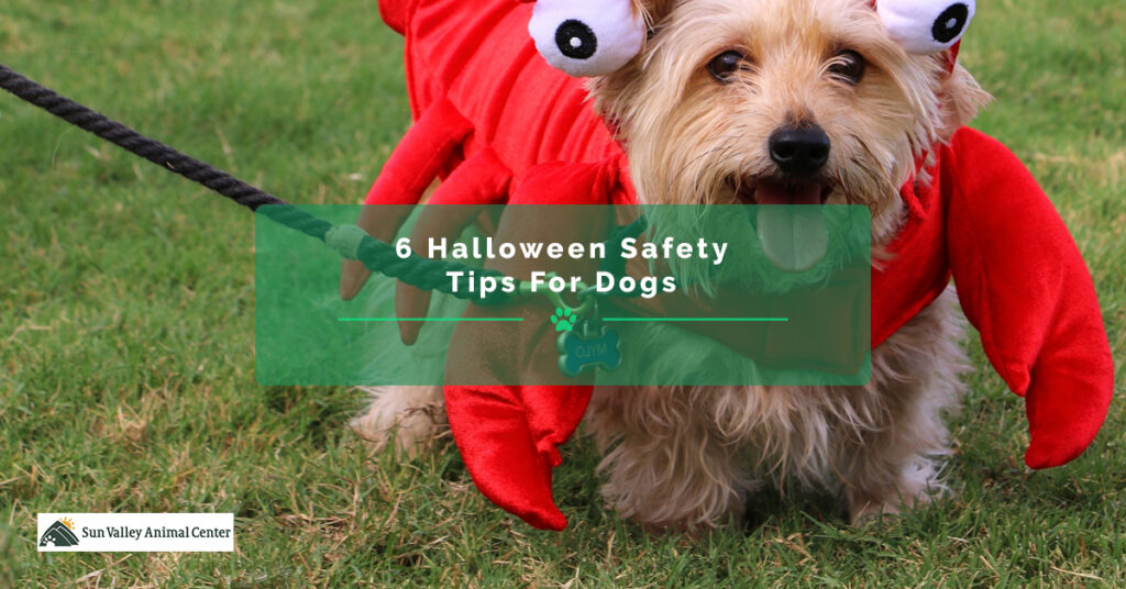 6-Halloween-Safety-Tips-For-Dogs-5bfd79a3c51d0