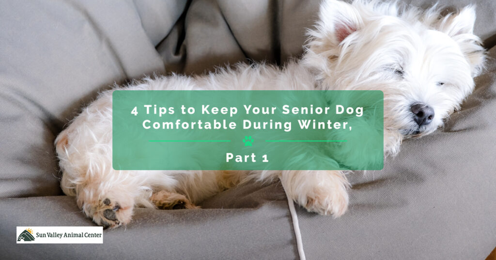 4-Tips-to-Keep-Your-Senior-Dog-Comfortable-During-Winter-Part-1-5c3525365a7a8