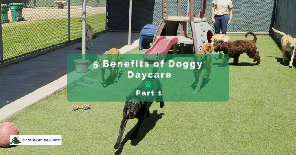 5-Benefits-of-Doggy-Daycare-Part-1-5c7551f584e20