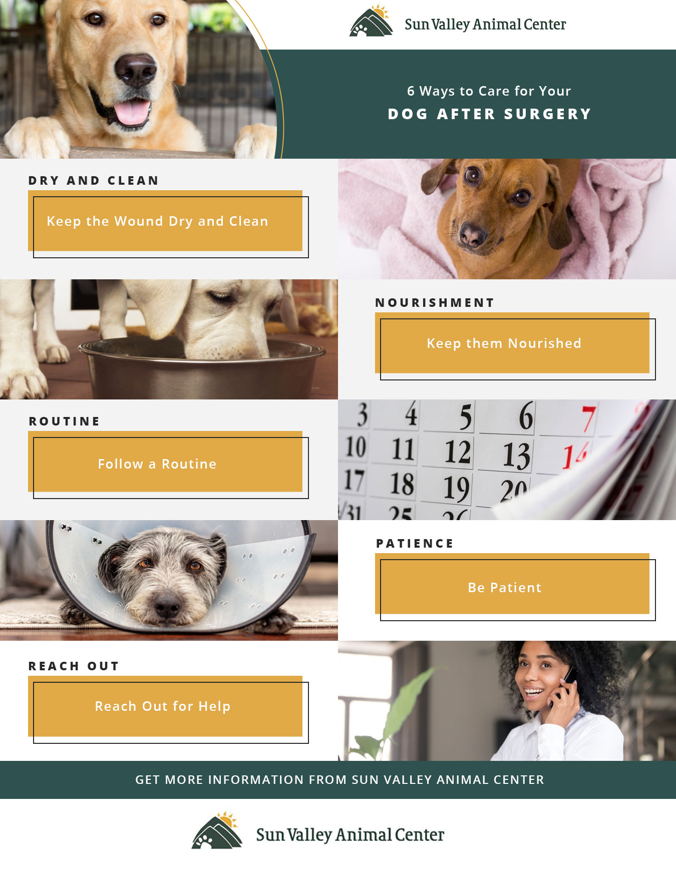 6-Ways-to-Care-for-Your-Dog-After-Surgery1